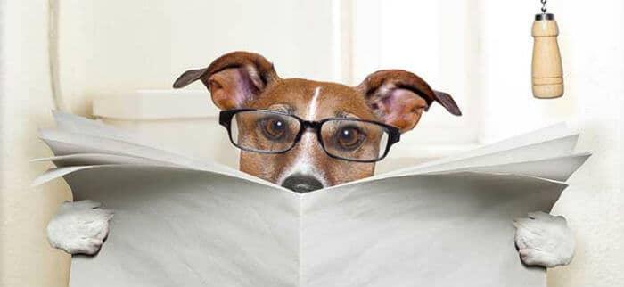 что делать когда у собаки запор