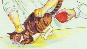 Как помочь коту при запоре