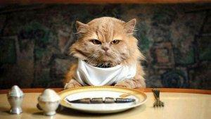 запор у кота диета