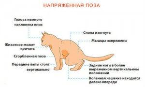 Что дать коту от запора