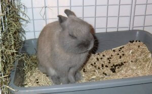 запор у кролика лечение