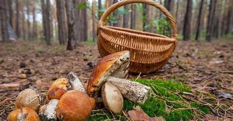 грибы запор